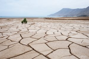 beach of mud cracks in the Pan de Azucar National Park in chile after the heavy floods of 2015