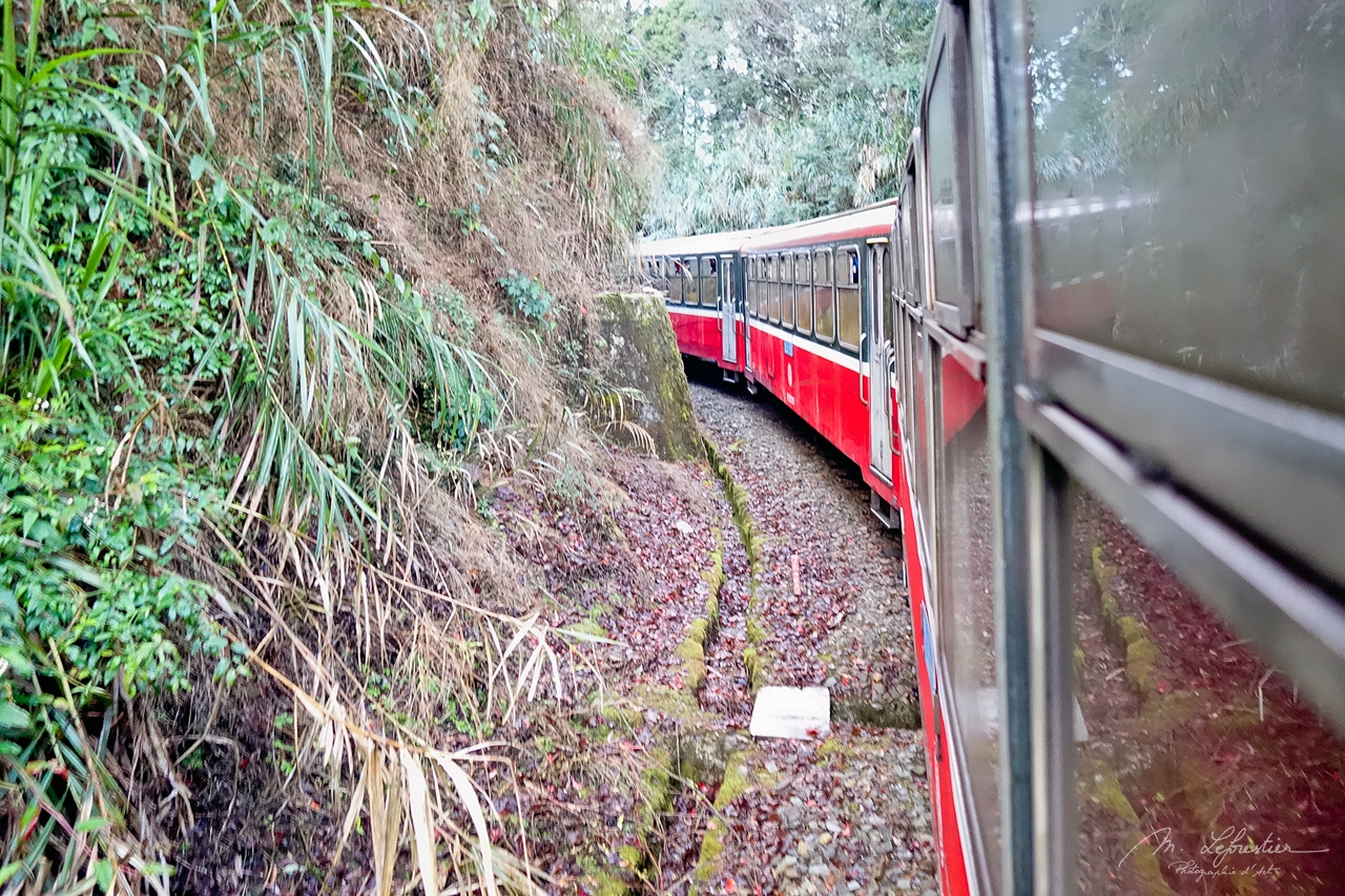 Taiwan: go back a century with the Alishan Forest Railway