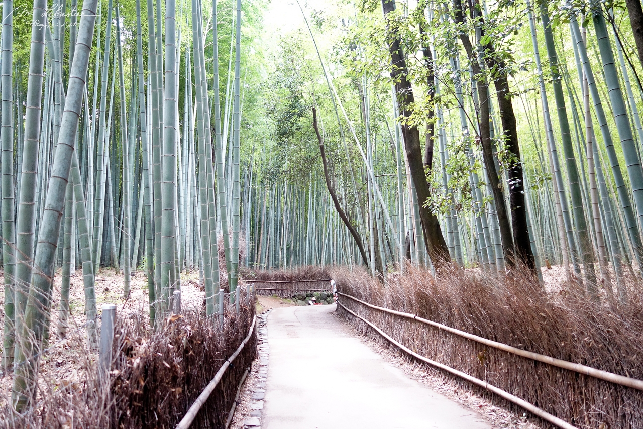 Japan: meet expectations in the Sagano Bamboo Grove in Arashiyama