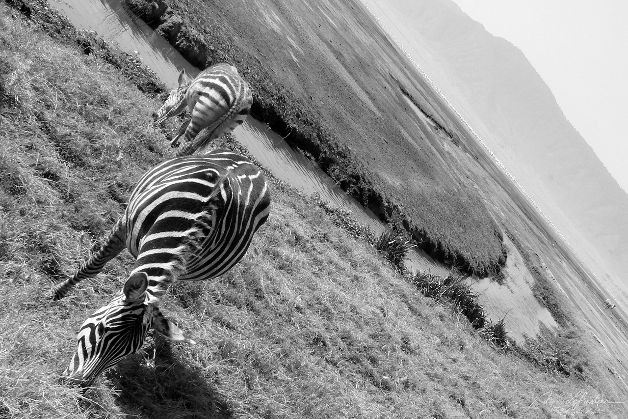 Tanzania: enjoy the peace at the Ngorongoro crater