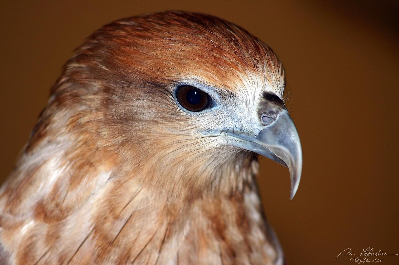 Malaysia: meet birds in Langkawi island