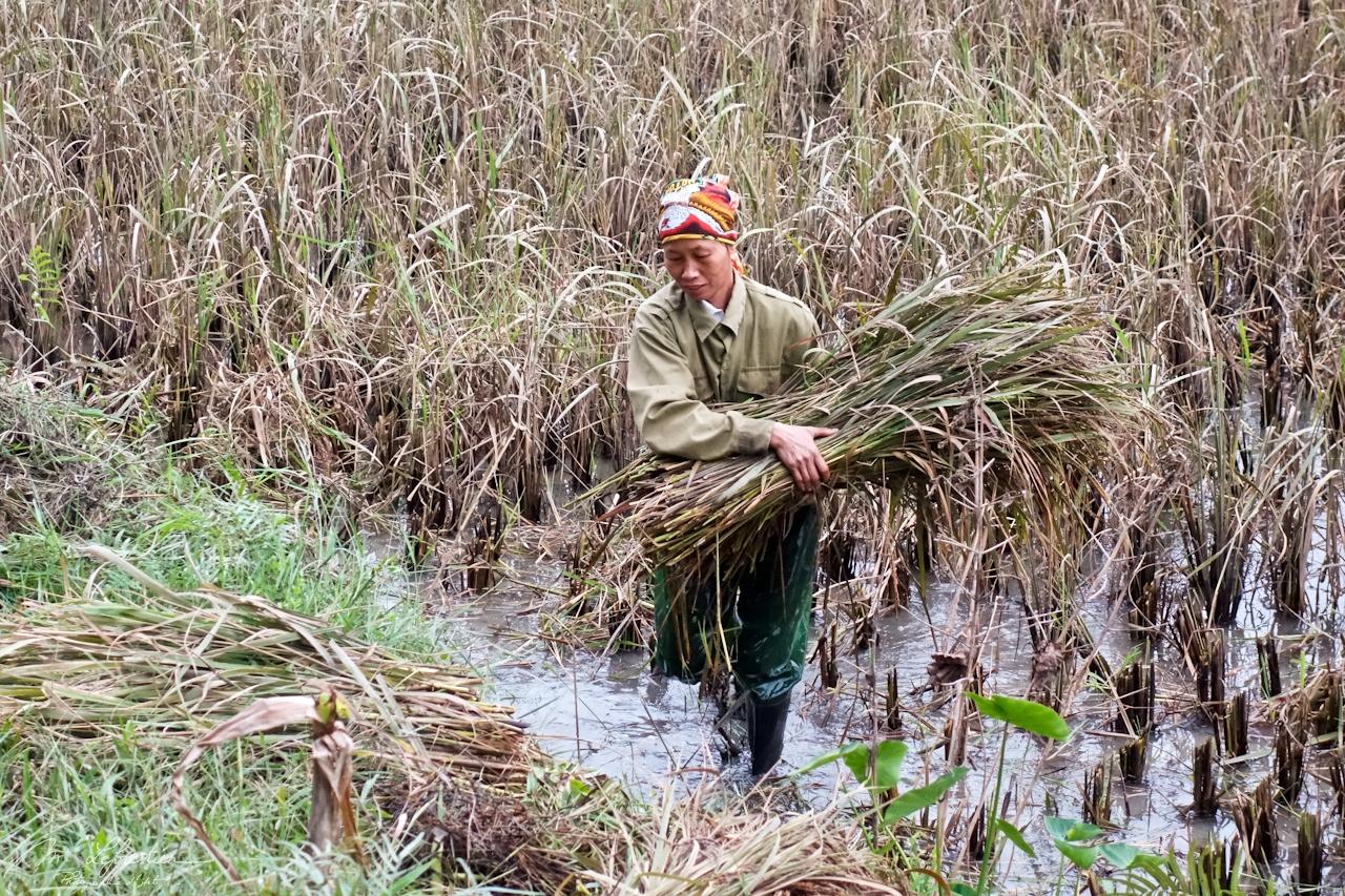 Vietnam: bike through rice fields in Tam Coc