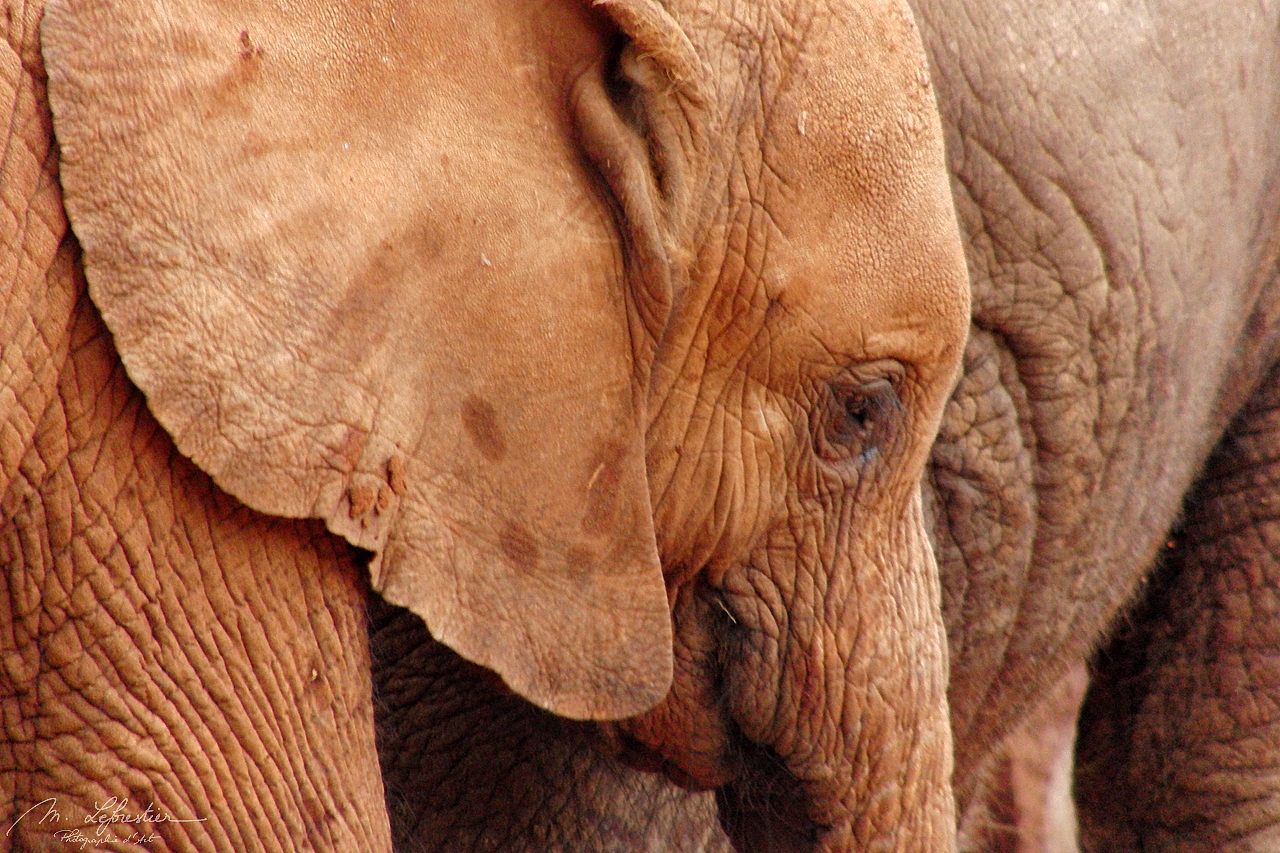 Kenya: watch adorable elephant orphans at Sheldrick Wildlife Trust in Nairobi