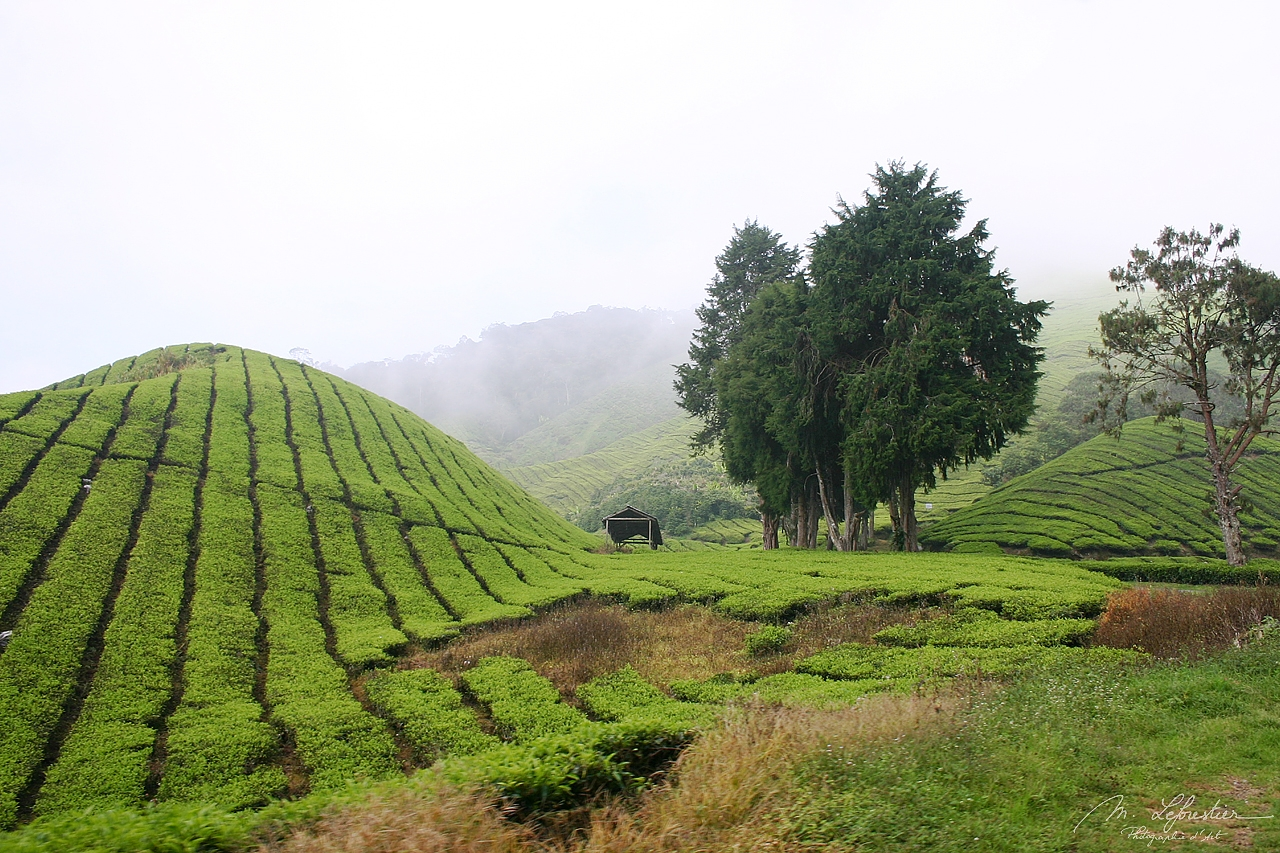 Malaysia: don't miss the stunning landscapes of Cameron Highlands