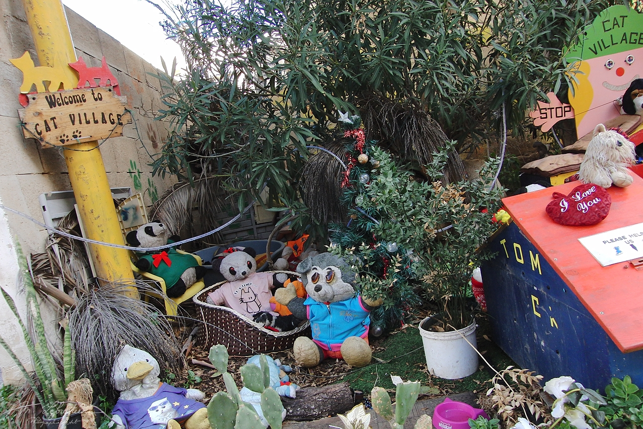 Malta: visit the popular cat village in St Julians