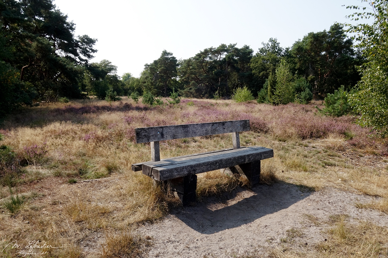 Netherlands: enjoy a walk in nature in the Strabrechtse Heide in Heeze