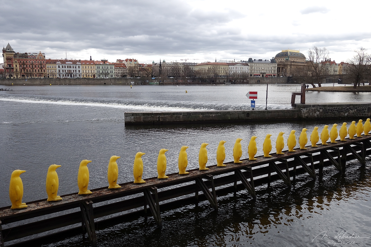 Czech Republic: meet the yellow penguins bringing an important message about the environment in Prague